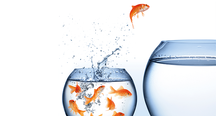 Fisk der springer fra lille til stor bowle
